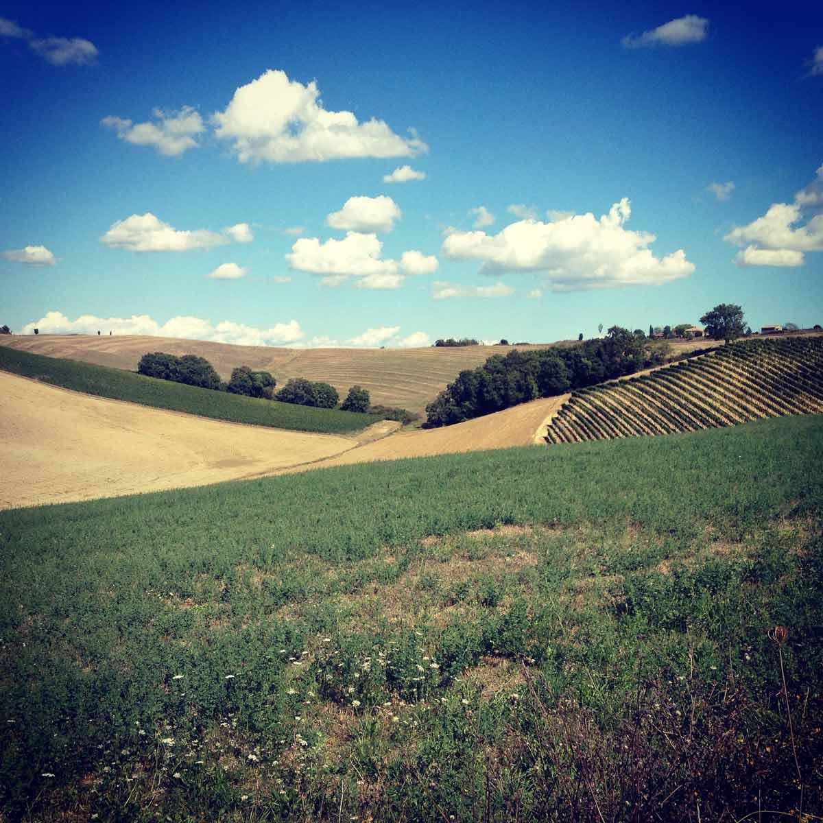 Francigena Press Tour // Val d'Orcia zona del Brunello di Montalcino