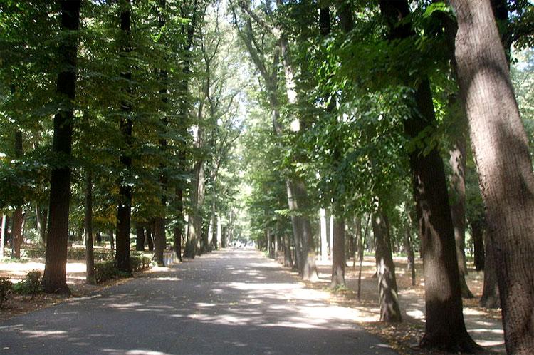 Strada e alberi al Parco delle Cascine di Firenze